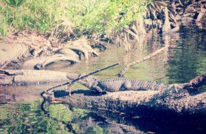Apalachicola River Tours